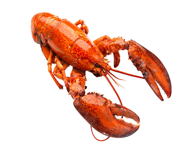 Lobster On White Background Wall Art
