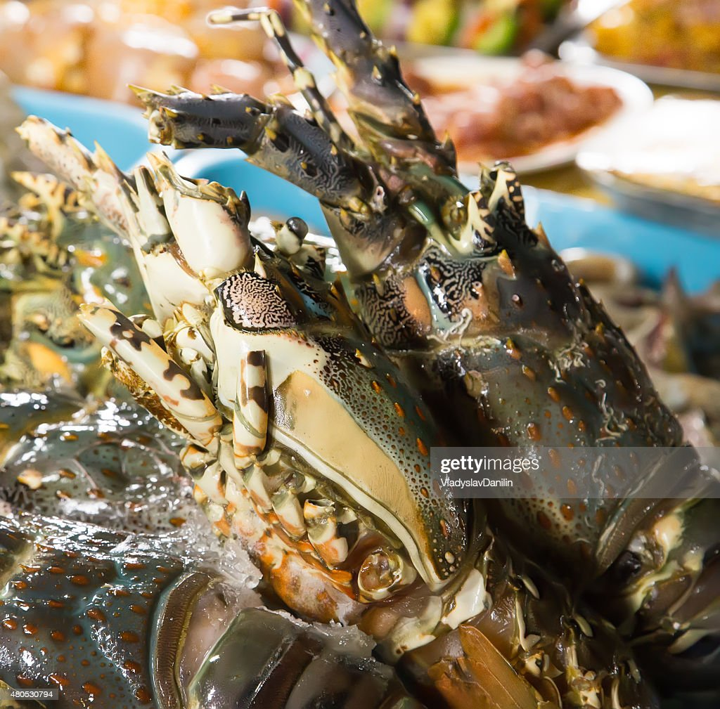 Lobster : Stock Photo
