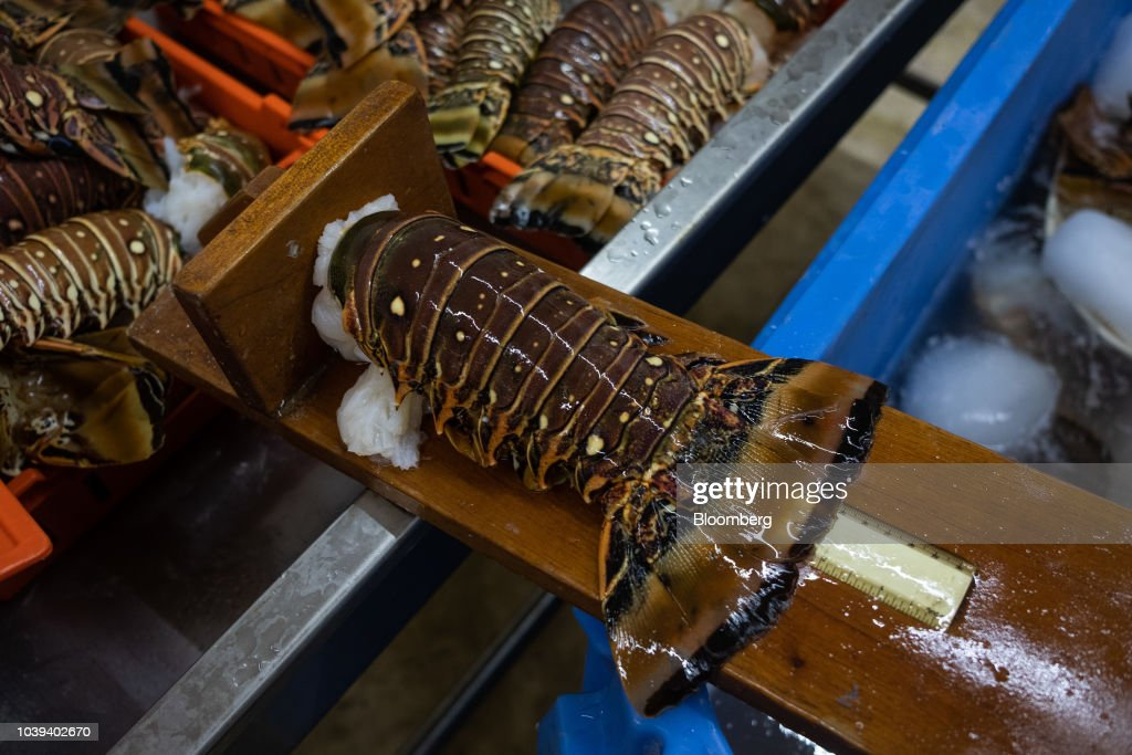 A Lobster Packing Facility As Mexican Economy Expands