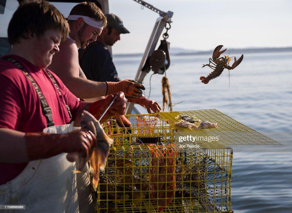 Maine's Lobster Industry Benefits From Rising Ocean Temperatures : Fotografía de noticias