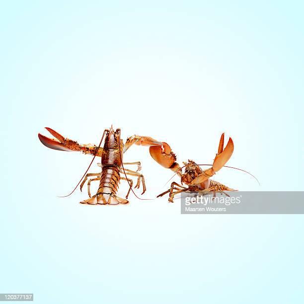 lobstermayhem dance 01