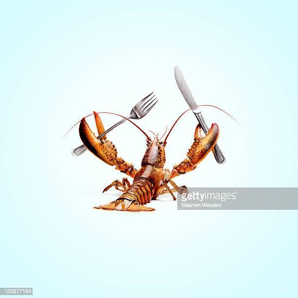lobstermayhem dinnertime