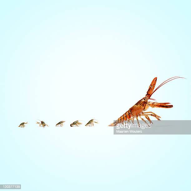 lobstermayhem follow the leader - following moving activity stock pictures, royalty-free photos & images
