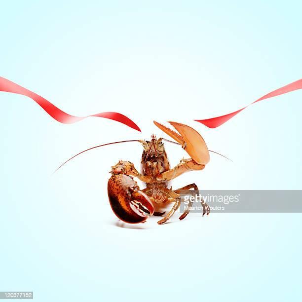 lobstermayhem grand opening