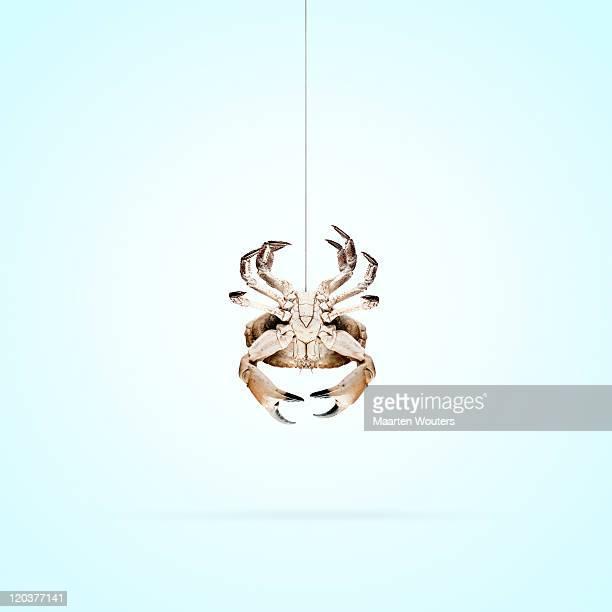 lobstermayhem spidercrab