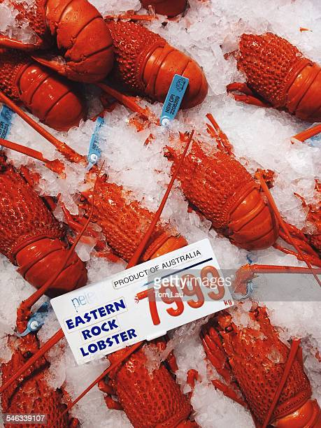 Lobsters and seafood galore at the Sydney Fish Markets Sydney Australia