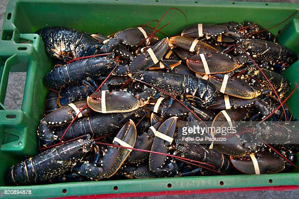 Lobsters in a green box at Harbor of Cleggan in Ireland