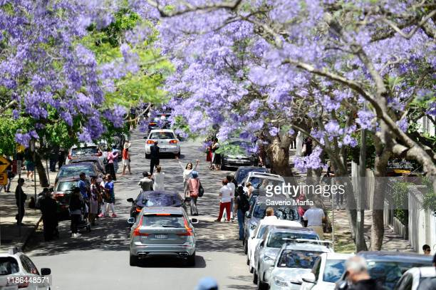 Local and international Tourists flock to photograph with their smart phones on McDougall Street in the Sydney suburb of Kirribilli on November 9th...