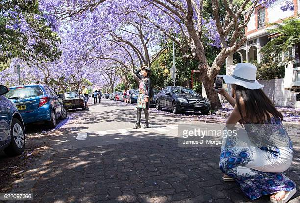 Local and international visitors photograph with their smart phones on McDougall Street in the north Sydney suburb of Kirribilli on November 10 2016...