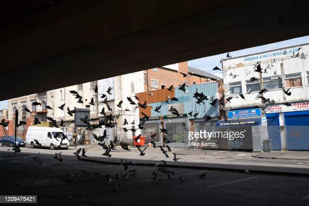 Local atmosphere due to Coronavirus lockdown is felt on a street by street level as streets remain deserted as a flock of feral pigeons take flight...