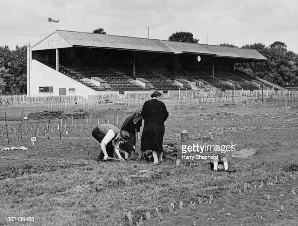 Local civilians dig their allotment plot on the polo fields of the Hurlingham Club as part of the Dig for Victory campaign to grow more food on 11th...