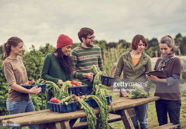 local community farming group collating organic produce in their shared allotment - harvest table stock pictures, royalty-free photos & images