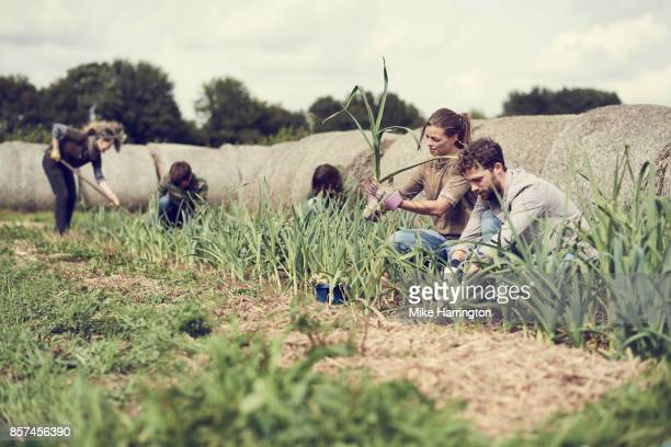 Local community harvesting leeks
