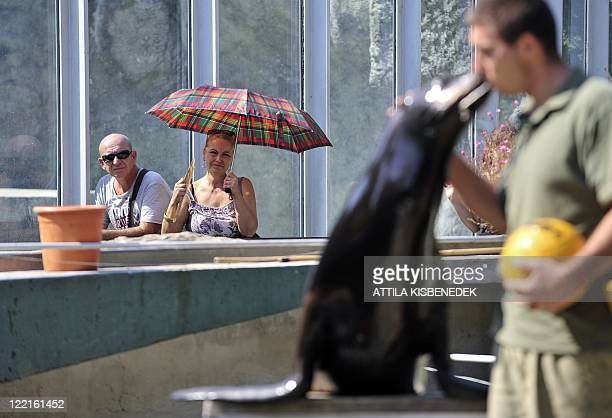 A local couple watches a water show presented by zoo keepers and their seals at the Budapest Zoo and Botanical Garden in Budapest on August 26 as the...