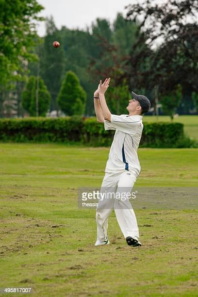 da cricket locale - theasis foto e immagini stock