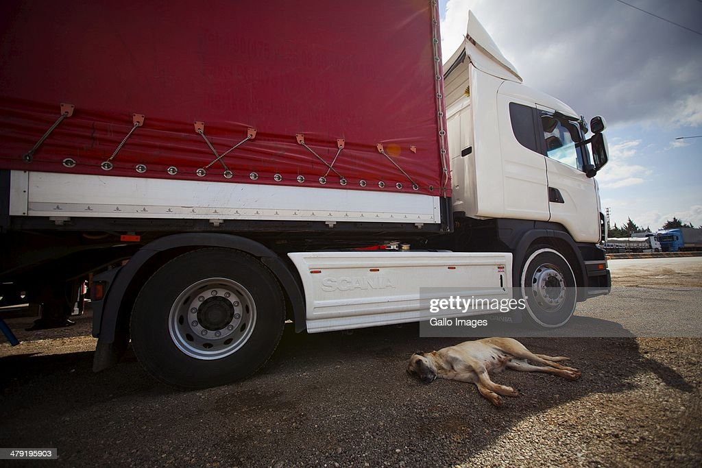 A local dog from a nearby farm rests in the shade of a waiting truck on March 12, 2014, in Killis City, Turkey. Truck drivers at the Turkish/ Syrian border near Kilis City wait 10-15 days to get their good through to the customs area where Syrian truckers can take the load to Syrian towns.