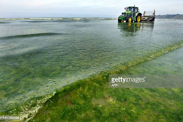 Local employees test a new device to remove green algae from the SaintMichelenGreves beach western France on June 29 2010 A campaign began in the...