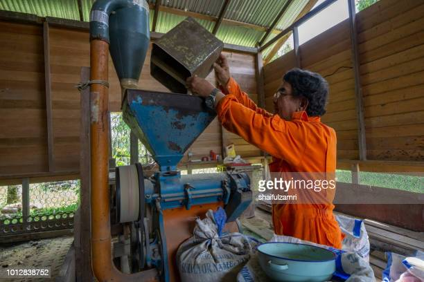 local farmer preparing a traditional bario paddy after harvest season at bario, sarawak, malaysia. - shaifulzamri foto e immagini stock