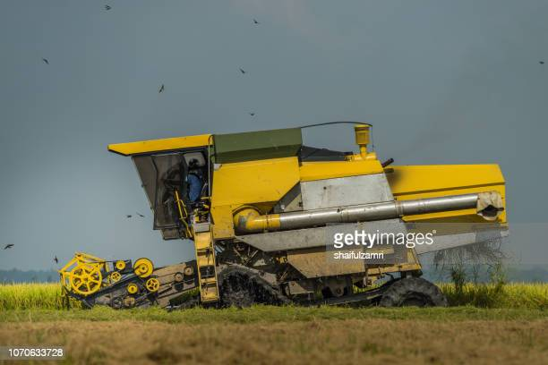 local farmer uses machine to harvest rice on paddy field. sabak bernam is one of the major rice supplier in malaysia. - shaifulzamri stock pictures, royalty-free photos & images