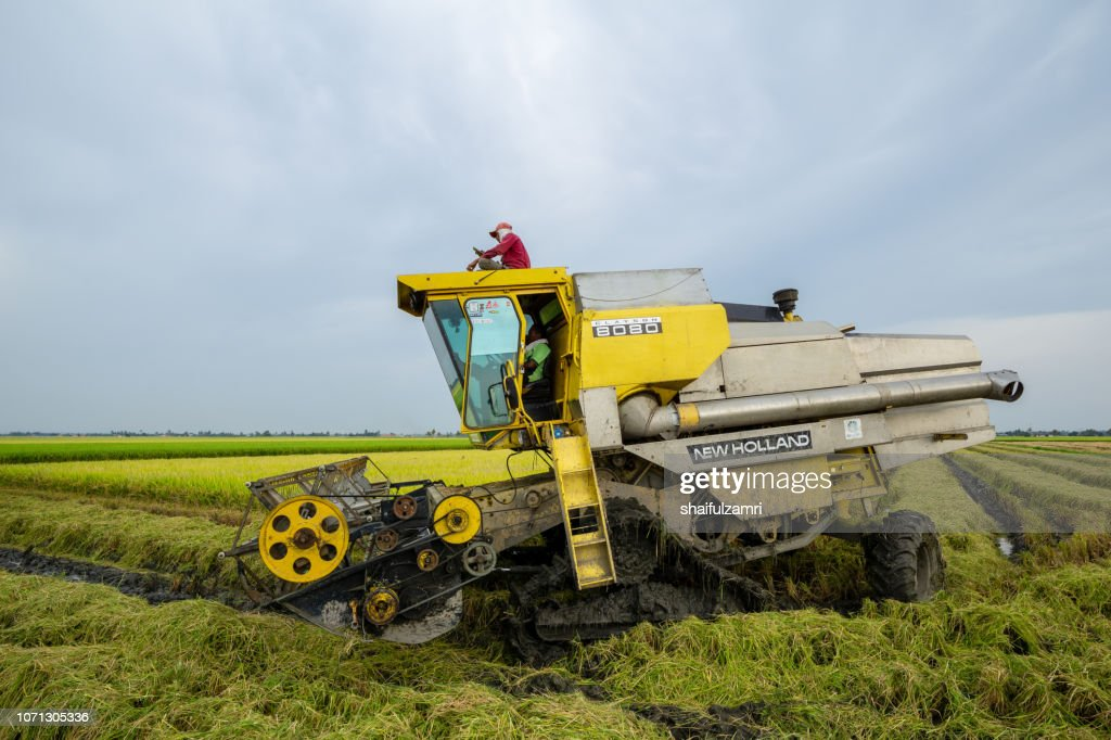 Local farmer uses machine to harvest rice on paddy field. Sabak Bernam is one of the major rice supplier in Malaysia. : Stock Photo