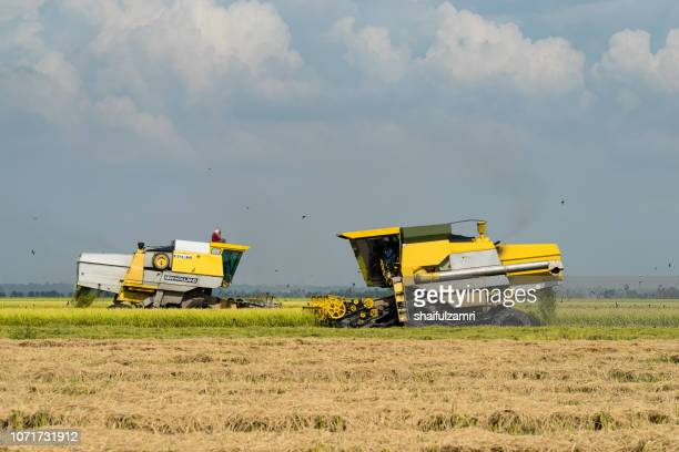 local farmer uses machine to harvest rice on paddy field. sabak bernam is one of the major rice supplier in malaysia. - shaifulzamri ストックフォトと画像