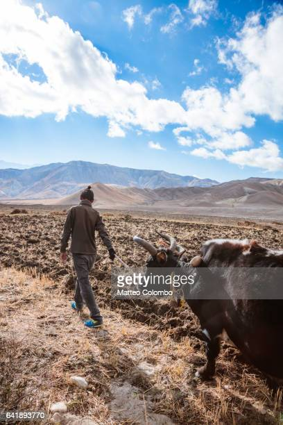 Local farmer with yak, Upper Mustang, Nepal