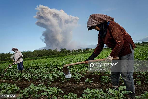 Local farmers work in their fields as Mount Sinabung spews pyroclastic smoke seen from Simpang Empat village on June 19 2015 in Karo District North...