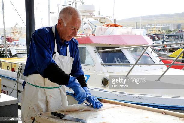 A local fisherman cut a codfish in fillets directly at the quay on August 22 2018 in Torshavn Denmark The Faroe Islands situated between Scotland and...