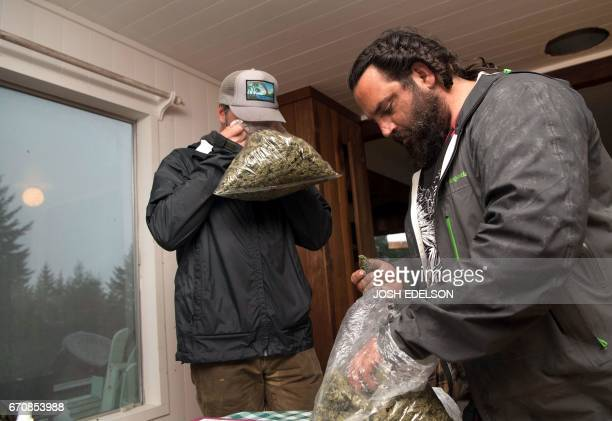 Local grower Adrian Shareve who has accepted payment in the form of pork and other barter items views marijuana products alongside grower Justin...