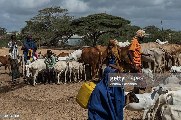 Local livestock farmers gather at a water filling station just outside the African Union Mission in Somalia's Forward Operating Base Barawe on...