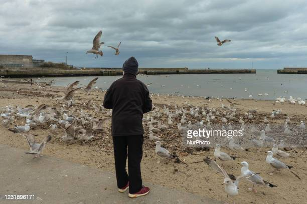 Local man feeds swans, seagulls and pigeons in Bray Harbour. On Tuesday, March 23 in Bray, County Wicklow, Ireland.