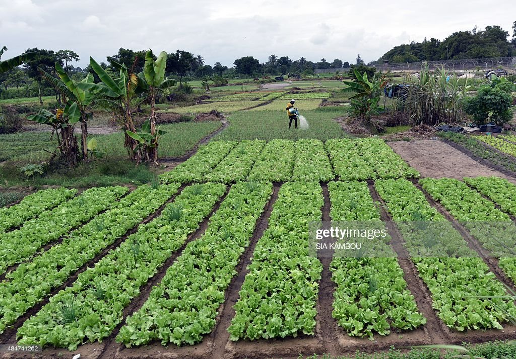 ICOAST-AGRICULTURE : News Photo