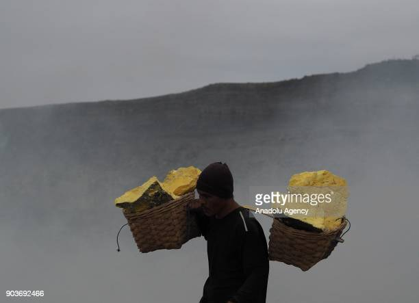 A local miner carries baskets of sulphur from the crater of Ijen volcano in Banyuwangi East Java Indonesia on January 11 2018 Along the slope local...