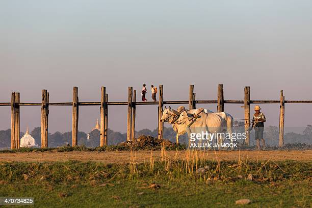 Local people life at U-Ben Bridge, Myanmar. This photo was shot in evening before sunset. Amarapura is a former capital of Myanmar, and now a...