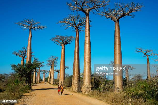 Local people walking through Baobab Alley near Morondava Western Madagascar