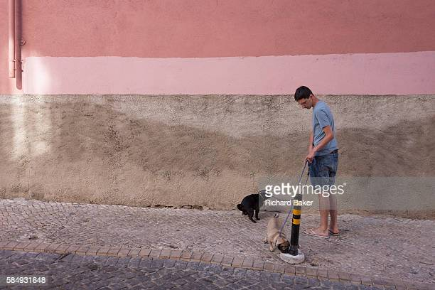A local pet owner stops to allow one of his Pug dogs to defecate on the pavement of a quiet residential street on 11th July 2016 in Lisbon Portugal...