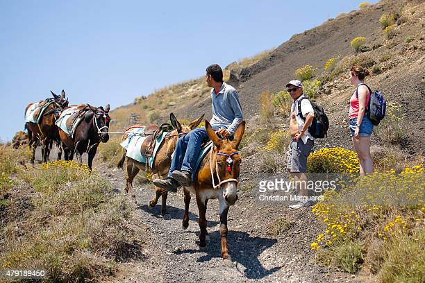 Local resident offers donkey rides for tourist on the way to the town Oia on June 11 2015 in Santorini Greece Santorini is an island in the southern...