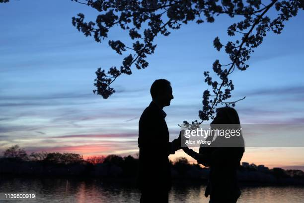 Local residents Andrew Wright proposes to his girlfriend Hannah Bagley as cherry trees are in full bloom at Tidal Basin April 1 2019 in Washington DC...