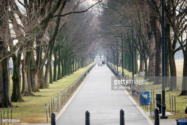 local road in the park in front of lincoln memorial at washington dc usa 2018 - 並木 ストックフォトと画像