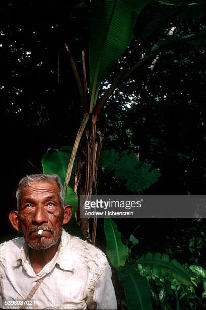 ayahuasca 写真 ストックフォトと画像 getty images
