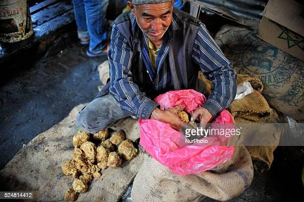 A local taking out Raw Hardened molasses to prepare molasses Chaku on 06 January 2015 at Tokha Kathmandu Nepal for the celebration of Maghe Sankranti...