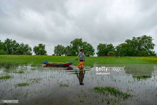 local thai farmer going home after harvest paddy in traditional way which using a canoe to carry paddy at lake thale noi. - shaifulzamri stock pictures, royalty-free photos & images