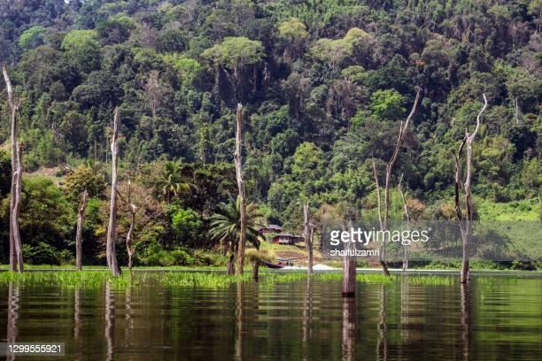 local tourist enjoying a boat ride in royal belum rainforest park, perak, malaysia. - shaifulzamri stock-fotos und bilder
