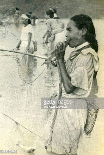 A local woman bites the head of fish to choke it circa May 1942 in Truk Islands Micronesia Truk Islands was under Japanese occupation during the...