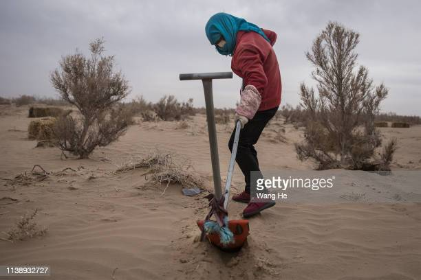 Local women plough sand before planting in the desert at Mingqin county on March 28th 2019 in Wuwei Gansu Province China In order to prevent...