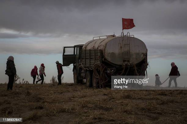 Local women water newly planted saxaul in the desert at Mingqin county on March 28th 2019 in Wuwei Gansu Province Chin In order to prevent...