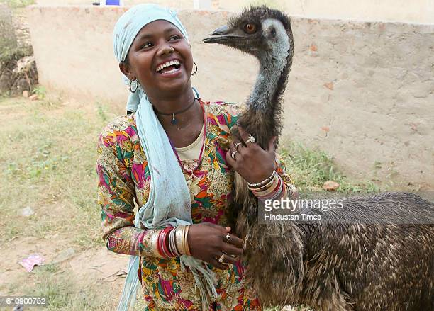 Locals feed and look after an Emu who loves kids and had strayed into Saperon Ki Dhaani was rescued by the residents from attacking dogs and is being...