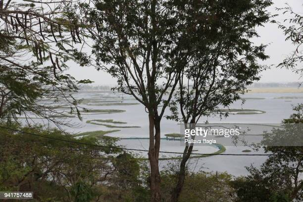 Locals make circular rings of flaoting vegetation to farm fish The Indian government has set up its first floating laboratory on a fibre glass boat...