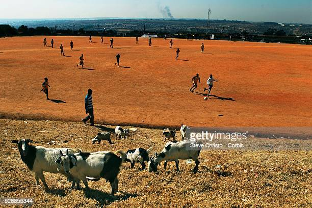 Locals play a morning game of soccer on a dirt pitch in Alexandra Township watched by a goats in Johannesburg South Africa during the 2010 World Cup