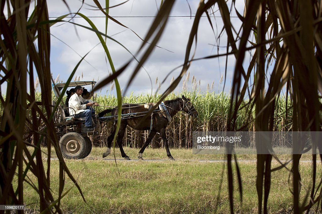 Locals ride a horse-drawn carriage through a field of sugarcane near Jatibonico, Cuba, on Sunday, Jan. 13, 2013. Sugar prices fell 16 percent last year as global supplies are forecast to outpace demand for a third year in 2012-13, according to the London-based International Sugar Organization. Photographer: Andrey Rudakov/Bloomberg via Getty Images